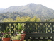 View from deck: View of Mount Tamalpais from our deck.