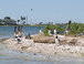 Pelicans and laughing gulls that live here year-round