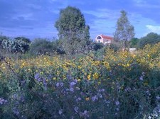 ADOBE HACIENDA SURROUNDED BY WILDFLOWERS