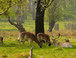 There are two wild herds of deer in Richmond Park - 5 mins away