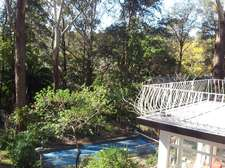 swimming_pool_and_gumtrees.jpg