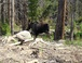 Depending on the time of year you can see Moose in Rocky Mtn Ntl Park or in Estes Park.