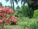Gardens Surrounding House: Tropical Gardens