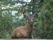 Buck sitting to the left of our carport.